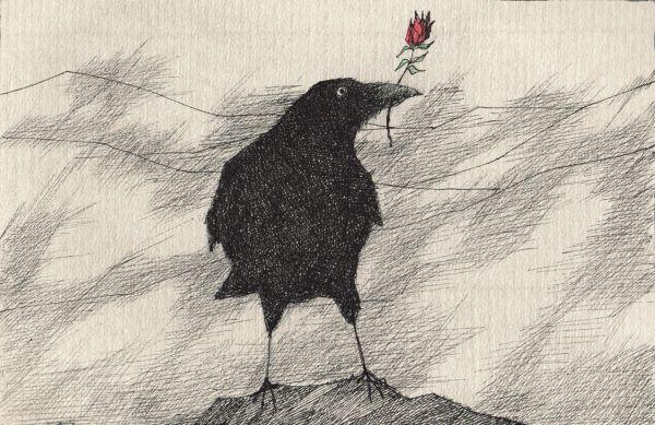 Rabe mit Rose Postkarte